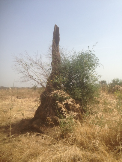 africa pics 3-5-16 568