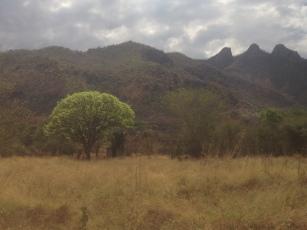 africa pics 3-5-16 674